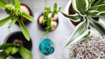 Des assainisseurs d'air naturels pour purifier la maison