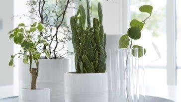 Quand les plantes vertes s'imposent dans le décor intérieur