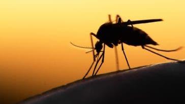 Test positif d'un médicament anti paludisme